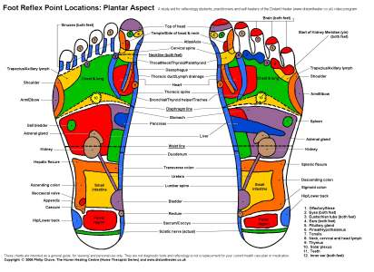foot chart: Studying reflexology at university or college reflexology charts